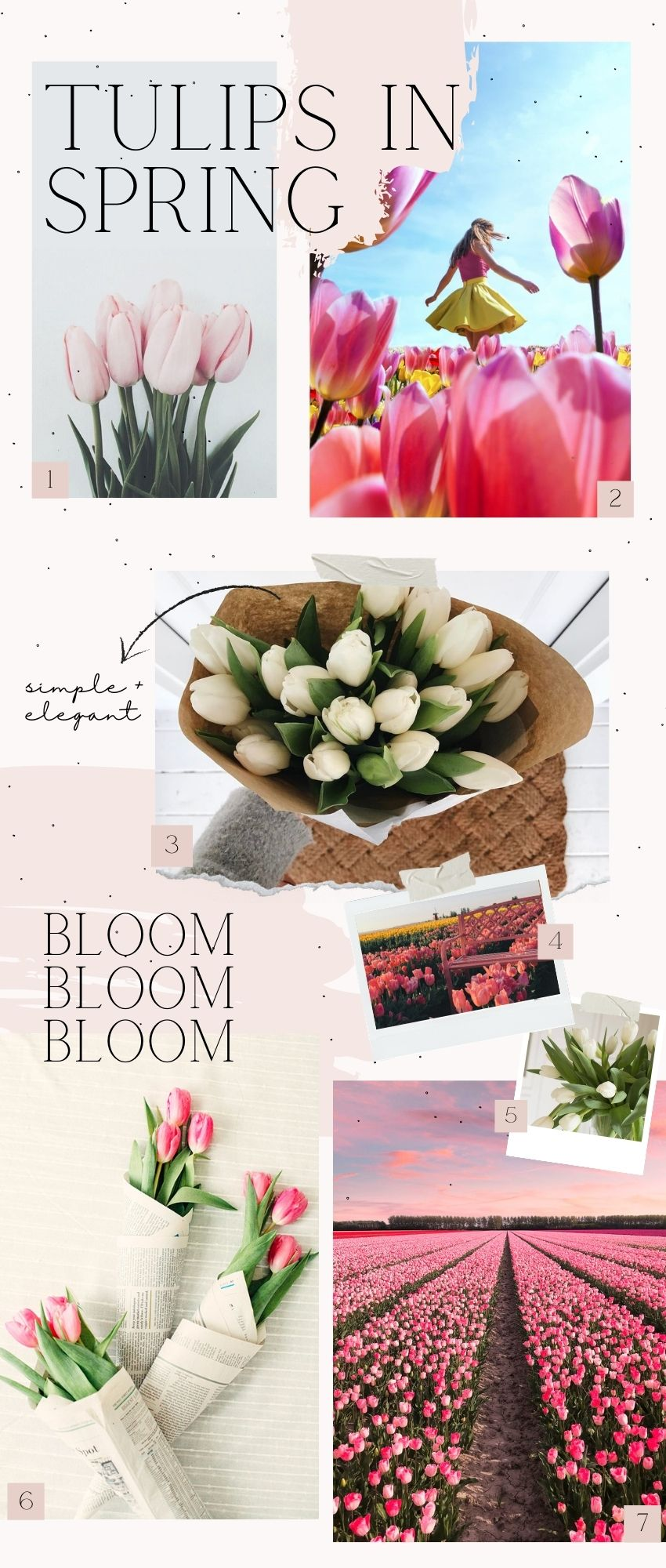 On this week's Monday Muse, we're celebrating tulips!  For some serious springtime vibes, browse through for pretty blooms and inspiration! #tulips #tulipsaesthetic #springaesthetic #spring #tulipandsage
