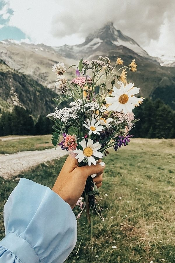 source - bytezza.com/ What's sweeter than a daisy flower? Aren't they lovely? Looking to be inspired by some serious daisy aesthetic? Here's a collection of our favourite photos! #daisyaesthetic #daisyflower #flowersaesthetic #daisyinspiration #daisies #daisy #tulipandsage