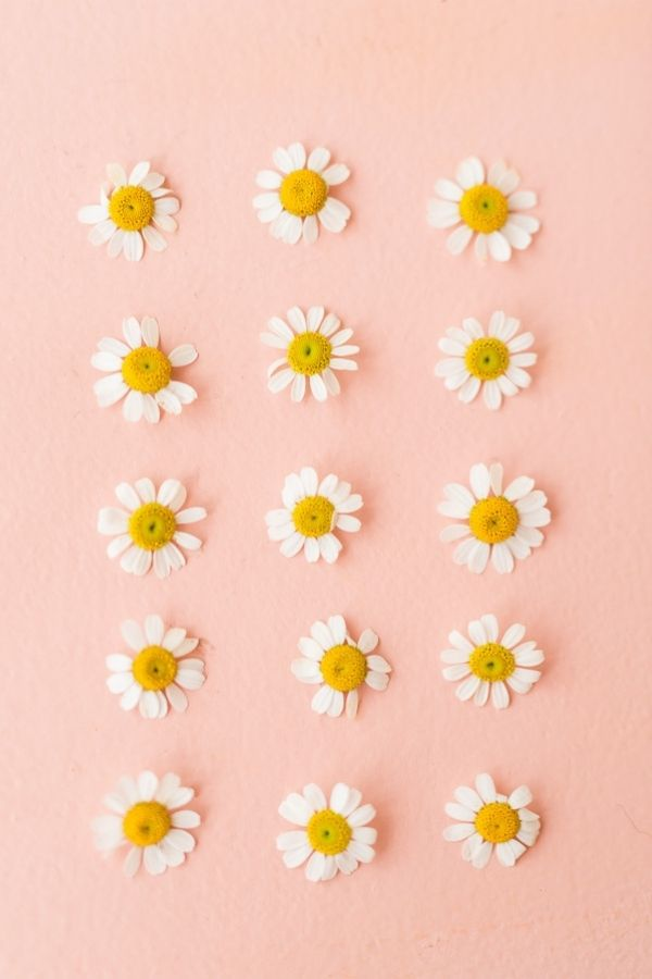 source -papernstitchblog.com/ What's sweeter than a daisy flower? Aren't they lovely? Looking to be inspired by some serious daisy aesthetic? Here's a collection of our favourite photos! #daisyaesthetic #daisyflower #flowersaesthetic #daisyinspiration #daisies #daisy #tulipandsage