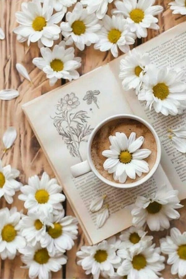 source - pinterest/ What's sweeter than a daisy flower? Aren't they lovely? Looking to be inspired by some serious daisy aesthetic? Here's a collection of our favourite photos! #daisyaesthetic #daisyflower #flowersaesthetic #daisyinspiration #daisies #daisy #tulipandsage